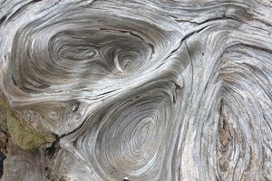 Driftwood, Bark, Pattern