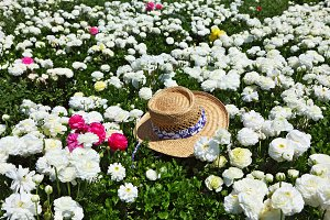 field of bright pink and white flowe