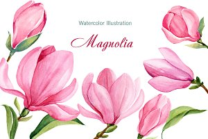 Pink Magnolia watercolor
