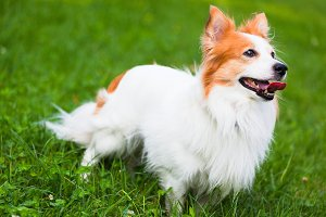 Cute little dog in the grass