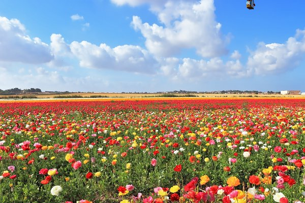 Spring Day in Israel