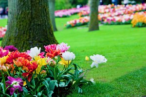 Colorful flowers in the garden/park