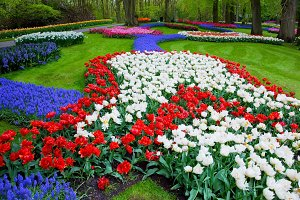Colorful flowers in spring park