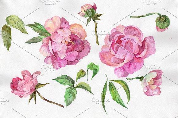 Elegant Flower Pink Peony PNG Set