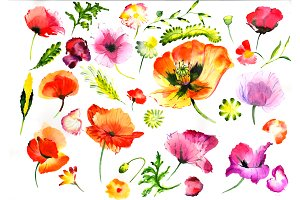 Summer colorful poppy flower PNG set