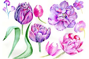 Delicate purple tulip PNG watercolor