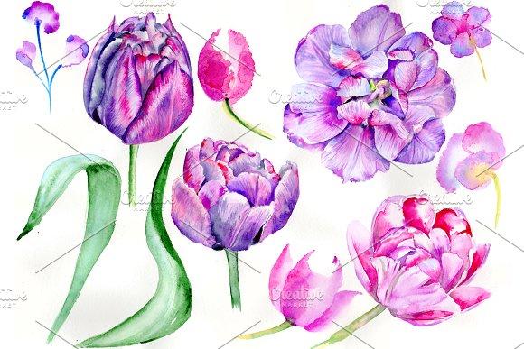 Delicate Purple Tulip PNG Watercolor