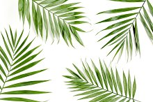 Tropical green palm leaves
