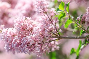 Spring or summer floral background w
