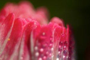 flower pearls