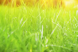 Natural green grass