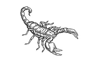 Scorpio engraving vector illustration