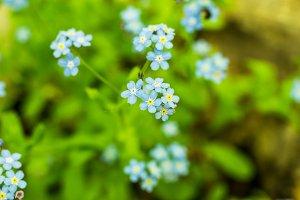 Blue field flower. Wild flower. Blue handicraft flower.