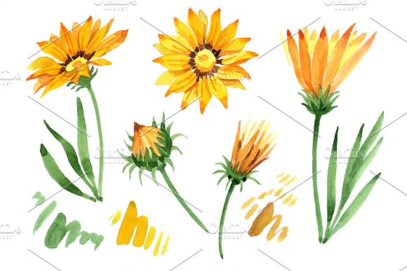 Wildflower Yellow Gazania PNG Set
