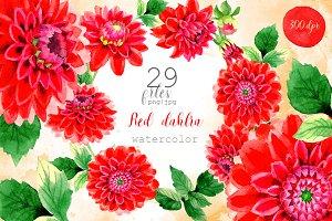 Beautiful red dahlia PNG watercolor