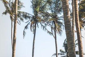 Young woman among palms trees. Bali island.