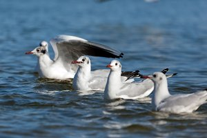 Seagulls floating on the sea