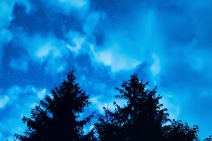 Two pine trees under blue night sky