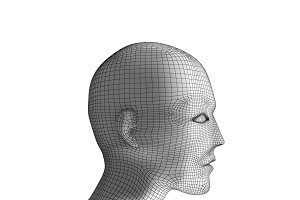 Human head. Wireframe model on white. Artificial intelligence in futuristic technology concept, 3d illustration