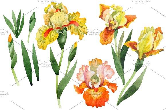 Yellow Flower Irises PNG Watercolor