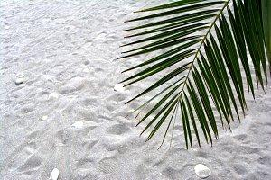 Palm tree branch. Tropical tree