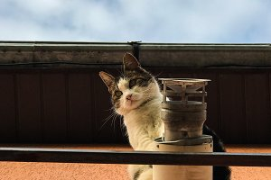 Cat on ventilation pipe