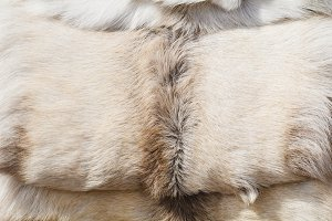 Close-up of fur of a white nordic wo