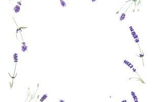 Lavender flowers frame flat lay