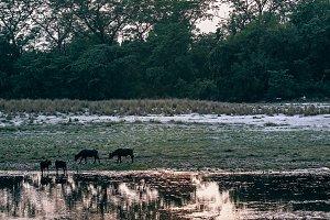 Bardiya Evening Fishing