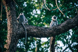 Monkeys Chilling on a Giant Tree