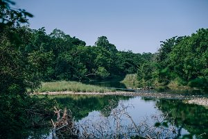 National Park Treeside