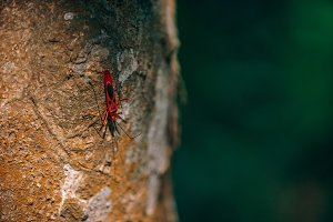 Red Insect Walking Down The Tree