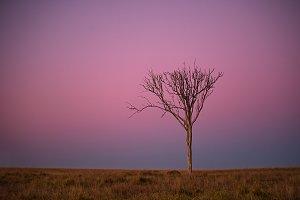 Twilight Scenic Tree