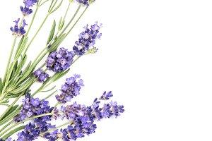 Lavender herb flower Floral border