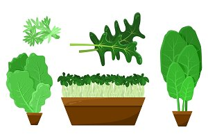 Green Salad Leaves and Roots Vector Collection