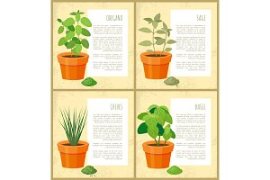 Oregano and Sage, Basil and Chives, Vector Banner