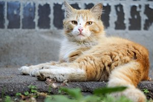 Dirty homeless redhead cat house wall. The problem of stray animals