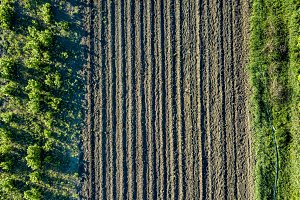 Aerial view planting young trees with irrigation system. Photo from the drone
