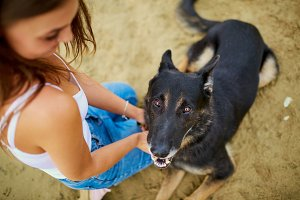 German shepherd with a girl.