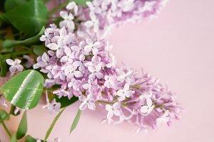 Minimalistic flatlay with flowers