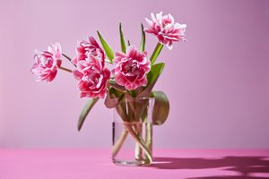 A composition of pink tulips in a glass vase on a pink background. Photo as a postcard