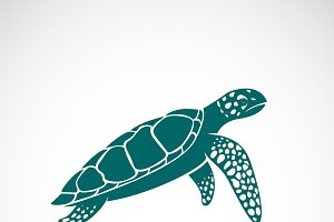 Vector of sea turtle. Animal.