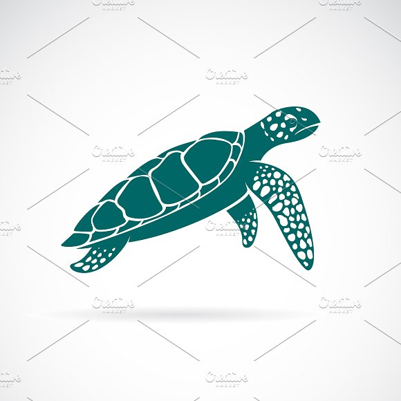 Vector Of Sea Turtle Animal