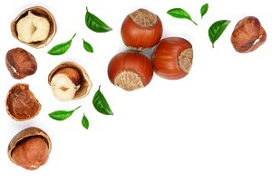 Hazelnuts with leaves with copy space for your text isolated on white background. Top view. Flat lay