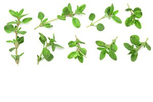 Fresh thyme spice isolated on white background with copy space for your text. Top view. Flat lay pattern