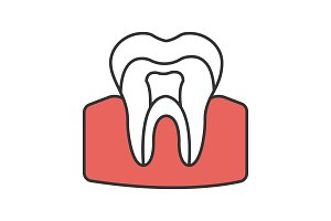 Tooth anatomical structure color icon