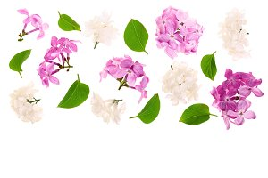 lilac flowers, branches and leaves isolated on white background with copy space for your text. Flat lay. Top view