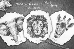 Wildlife / Africa