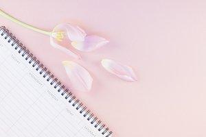 Pink tulip with open empty desk