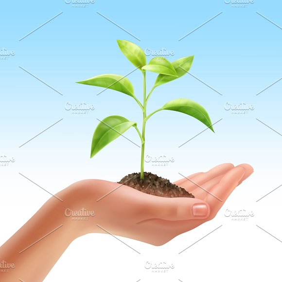 Young Plant In Human Hand